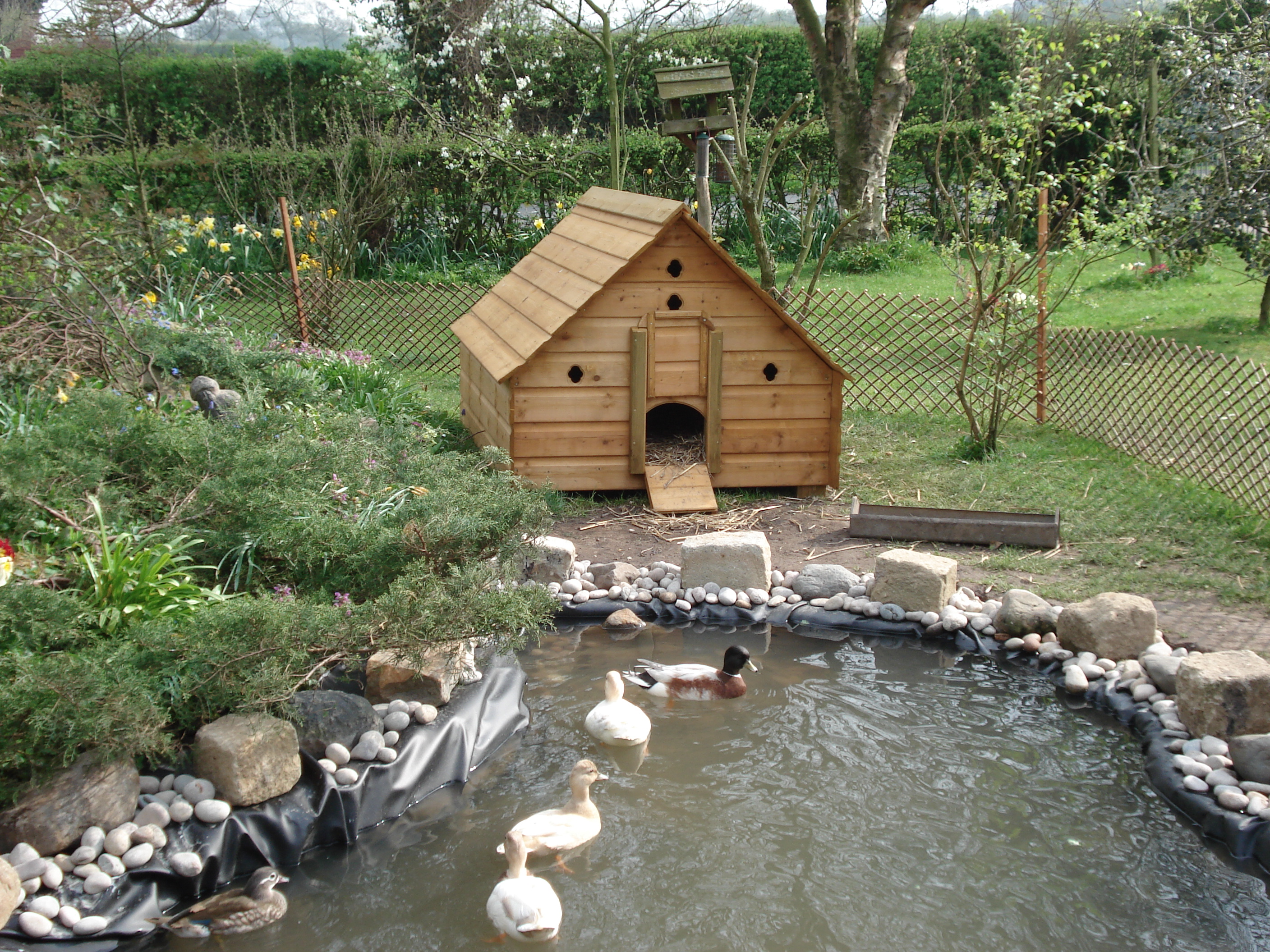 pin duck house on pinterest